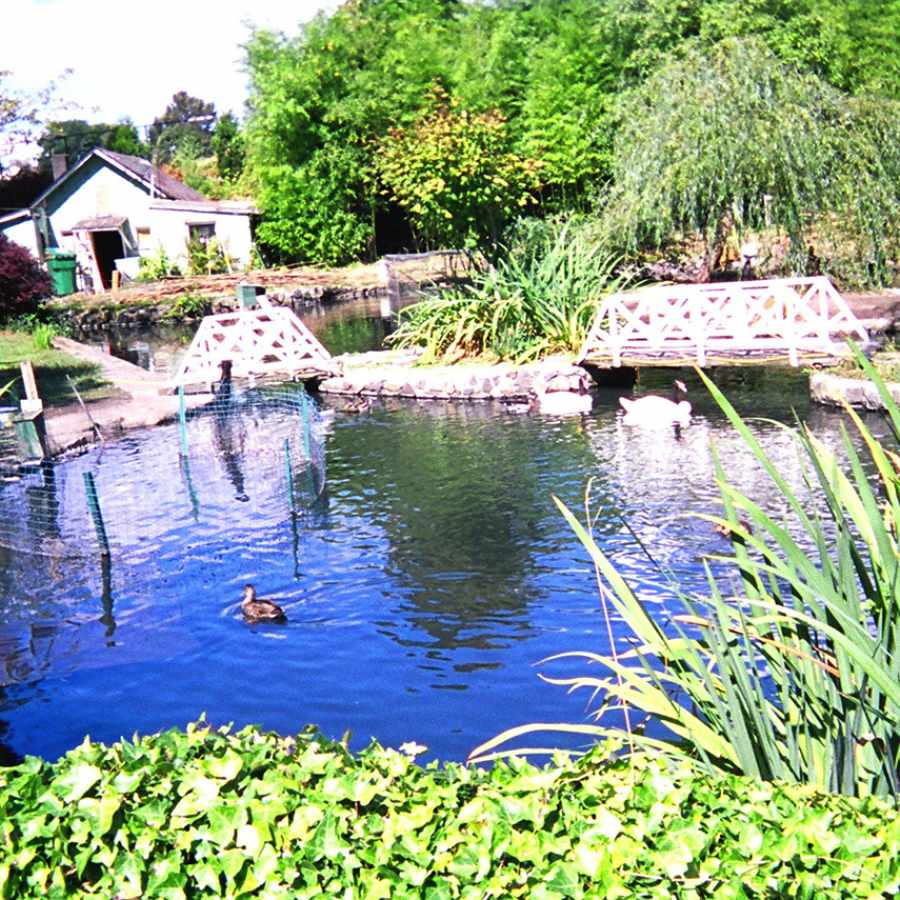 Pilling's Pond in the Licton Springs Neighborhood of Seattle