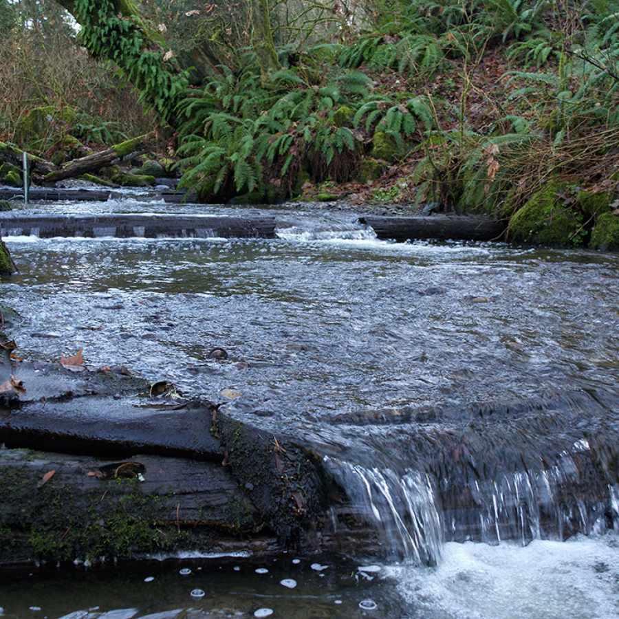 Pipers Creek in Carkeek Park Near the Crown Hill Neighborhood