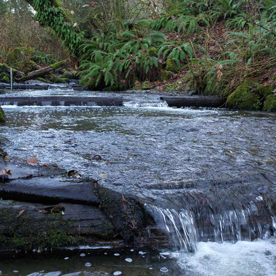 Pipers Creek in Carkeek Park